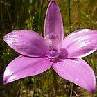Pink Enamel by Erika Lieftink