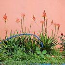 Pink sunbathing flowering wall by Annemie Hiele