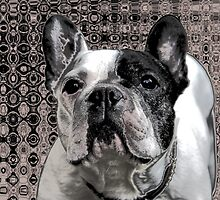 french bulldog by fuxart