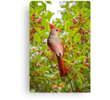 Red Bird Amidst Red Berries Canvas Print