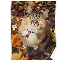 Elsie-cat In Autumn  Poster