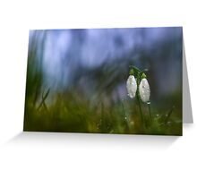 Snowdrops in pair Greeting Card