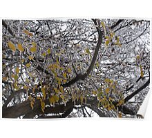 Caught between autumn and winter Poster