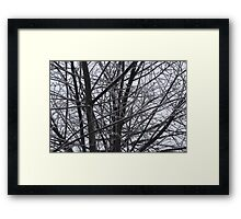 Iced Limbs Framed Print