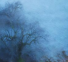 Hoar Frost and Fog........Little Tree by Imi Koetz