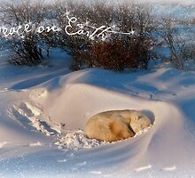 Peace & Goodwill from Yoga Bear by Owed To Nature