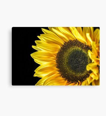 Sun Flower Macro  Canvas Print