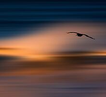 73A1102 Pelican Blur by David Orias