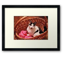 Lovely cat preparing for winter Framed Print