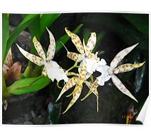 Spotted Orchid - Garden of the Sleeping Giant Poster