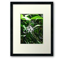 White Orchid - Garden of the Sleeping Giant, Fiji. Framed Print