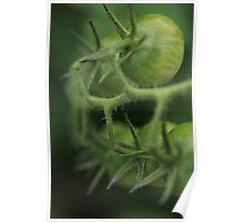 Summer Green Poster