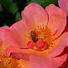 Bee chilling on a flower by Bailey Mattas