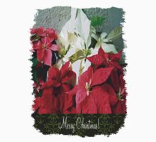 Mixed color Poinsettias 3 Merry Christmas S6F1 Kids Clothes