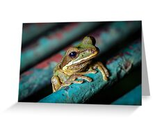Peeking Through the Grate, Masked Tree Frog (Smilisca phaeota)  Greeting Card