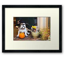 Guard Dog French Quarter  Framed Print