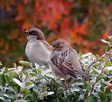 SPARROWS (2) by Sandra  Aguirre