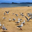 Seagull Screaming Symphony by George Petrovsky
