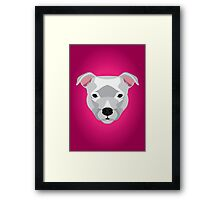 White Staffordshire Bull Terrier Framed Print