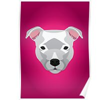 White Staffordshire Bull Terrier Poster