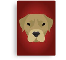 Golden Labrador  Canvas Print