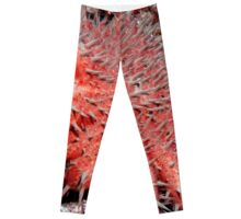 Crown of Thorns Starfish Leggings