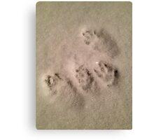 A Bunny's Footprints Canvas Print