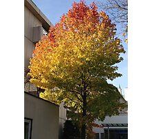 The Rainbow Tree Photographic Print