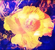 Eerie Amethyst Yellow Poppy Blossom by stine1