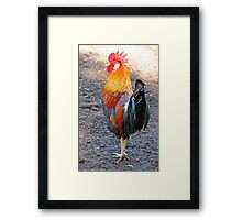 Mr. Rooster Framed Print