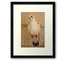 Pigeon Fly The Coop Framed Print
