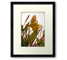 Yellow Flower In The Sunshine Framed Print
