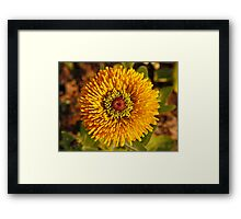 Bulls Eye Framed Print