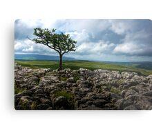 Conistone Tree Metal Print