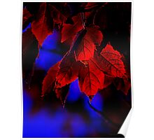 First Touch of Morning - fall autumn leaves red blue glow Poster