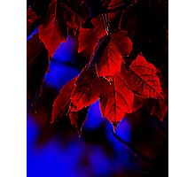 First Touch of Morning - fall autumn leaves red blue glow Photographic Print