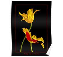 Tulip Sculpture Poster