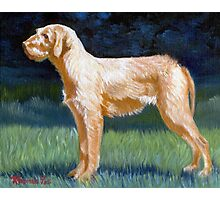 Hungarian Wirehaired Vizsla Dog Portrait Photographic Print