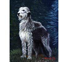 Irish Wolfhound Dog Portrait Photographic Print
