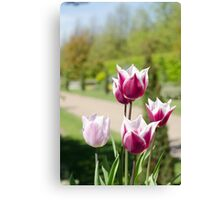 Summer tulips Canvas Print