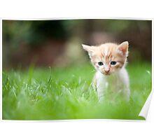 Sad kitty Poster