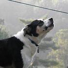 Dog Howling by jessicacbarker