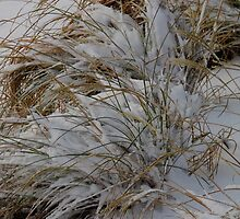 Grasses and Snow by WildestArt