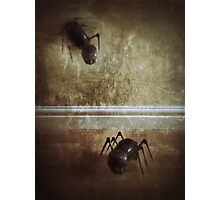 The Myrme Photographic Print