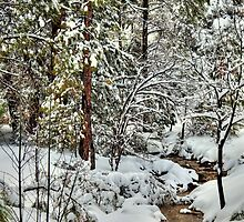 Snowy Mountain Creek by Diana Graves Photography