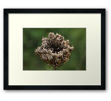 Cup o' Nature Framed Print