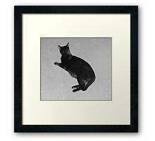 Stark Cat Framed Print