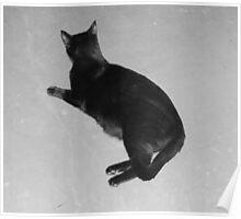 Stark Cat Poster
