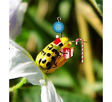 The Santa Ladybug Photographic Print