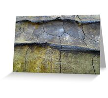 Alligator Snapping Turtle Shell Greeting Card